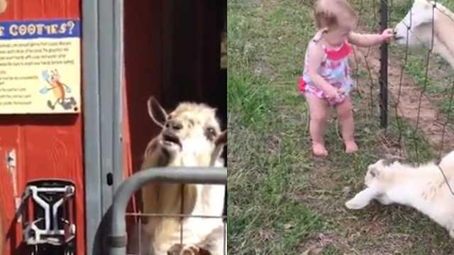 动物们爆笑打招呼,方式太暴力!
