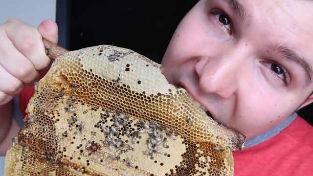 太重口!小哥生吃带着活蜂的蜂巢