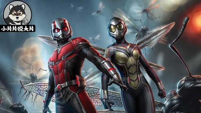 《蚁人2:黄蜂女现身》观影前瞻!