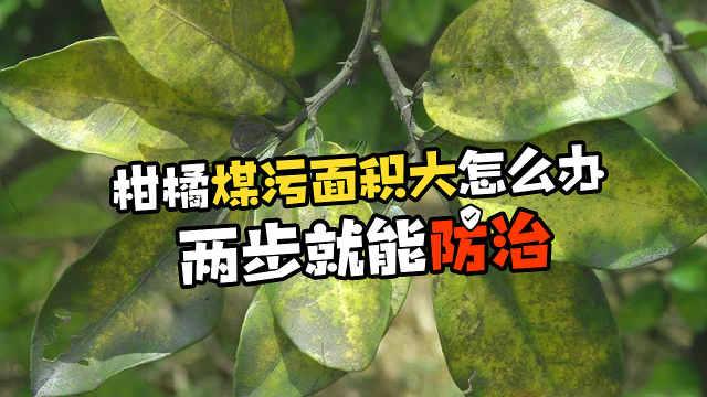 最新柑橘煤污防治技术集合,快收藏