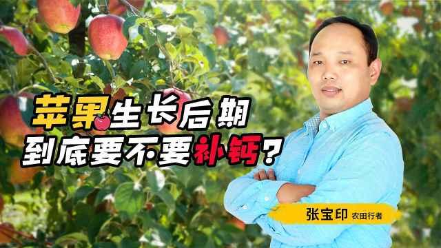 苹果生长后期,到底要不要补钙?