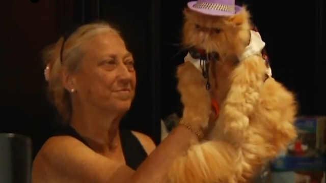 猫猫被打扮成上世纪20年代的名流
