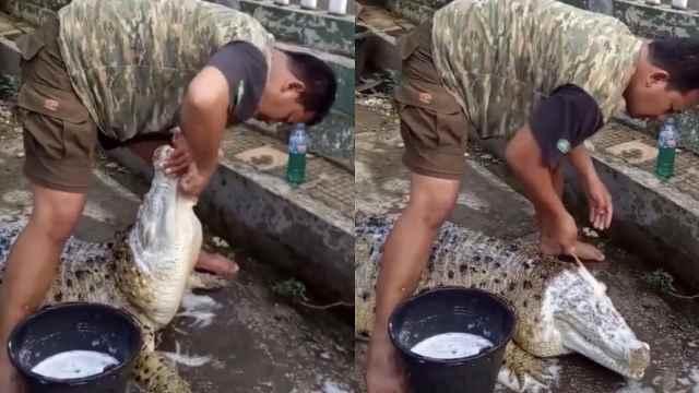 心真大!印尼男子为鳄鱼刷牙洗脸