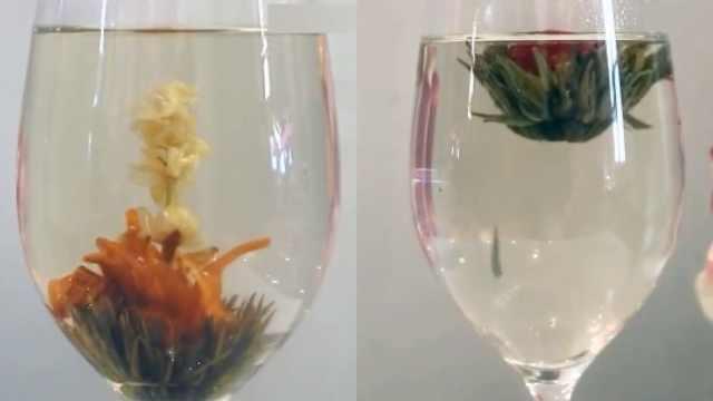一杯高颜值的茶,茶叶进水变成花!