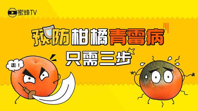 预防柑橘青霉病,只需三步!