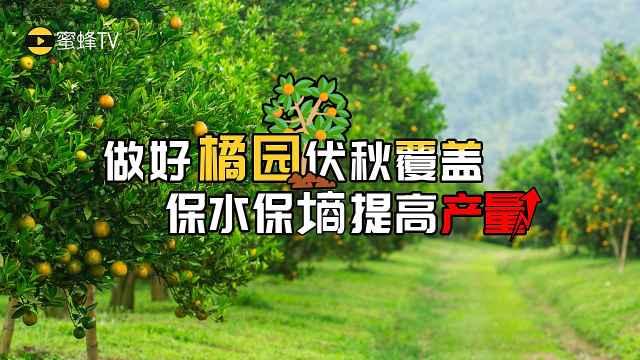 做好橘园伏秋覆盖,保水保墒增产量