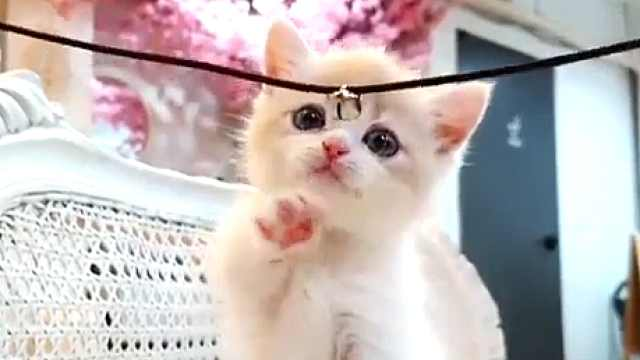 吸猫人士福利,活捉一只美颜小猫咪