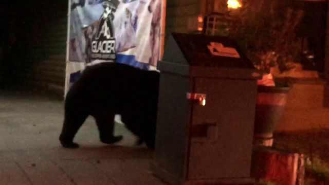 美国黑熊半夜逛街,路人亲切打招呼