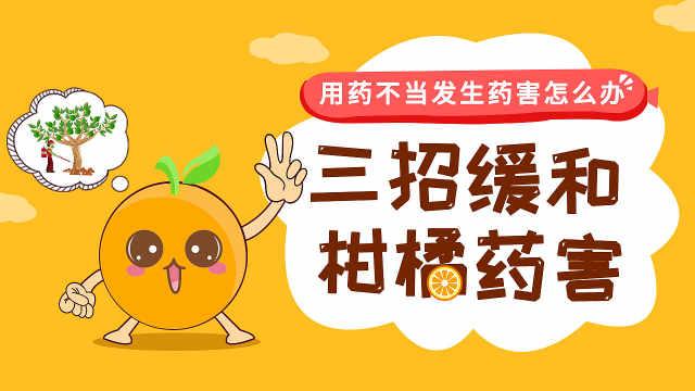 三招缓和柑橘药害