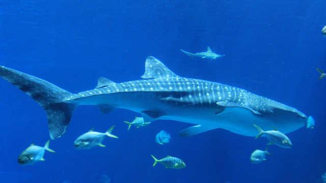海底压强那么大,为什么鱼却没事?