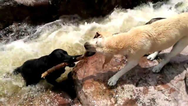 动物救动物的4个瞬间你感动到了吗