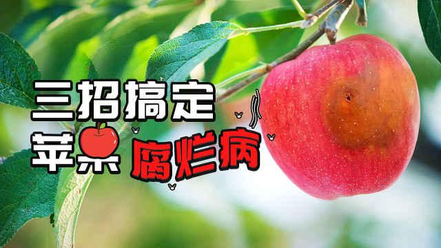 三招搞定苹果腐烂病!