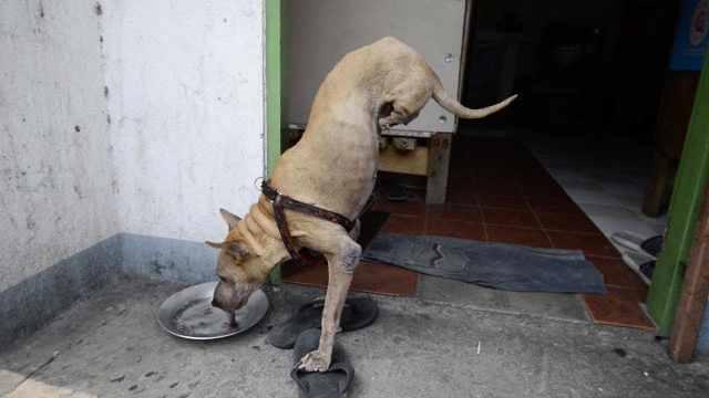 泪奔!残疾狗狗只靠前脚倒立走路