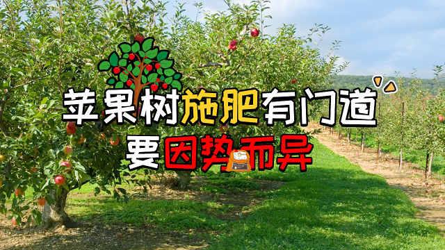 """苹果树施肥有门道,要""""因树而异"""""""