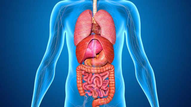 假如器官长在人体外面会发生什么?