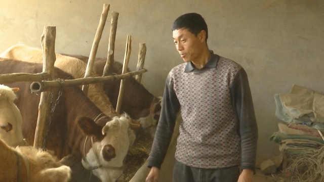 2贫困户养牛16头,成村里致富带头人