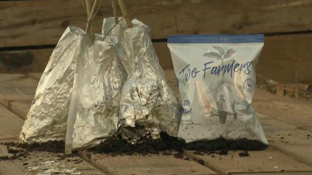 英国公司用桉树叶制造薯片包装袋