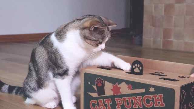 网红逗猫神器,真的好用吗