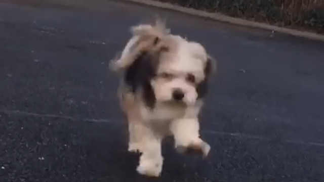 这狗子蹦蹦跳跳的模样太可爱了
