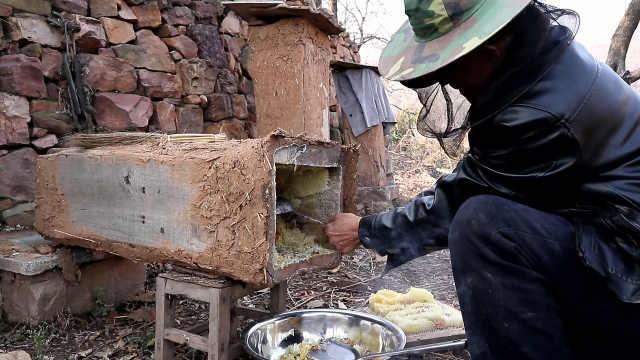 老人山崖养蜂一年割一次蜜:不搀假