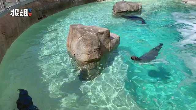 小海狮被救事件,海洋馆的后续采访