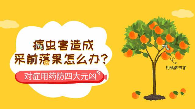 病虫害造成的柑橘采前落果怎么办?