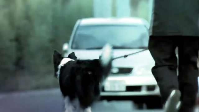 因不牵绳遛狗,日本男子被逮捕