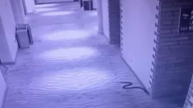 男子带毒蛇开房反被咬死,女孩报警