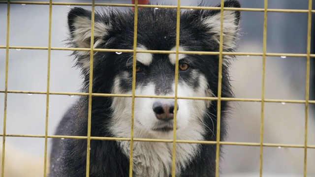 阿姨19年间收养近600只流浪狗