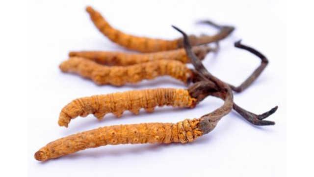 为什么冬虫夏草被药监局踢出保健圈