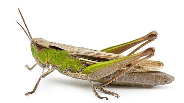 昆虫不同类型的足是怎样适应环境的