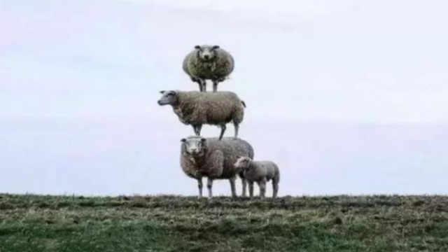 跳崖上树!山羊这种生物究竟有多牛