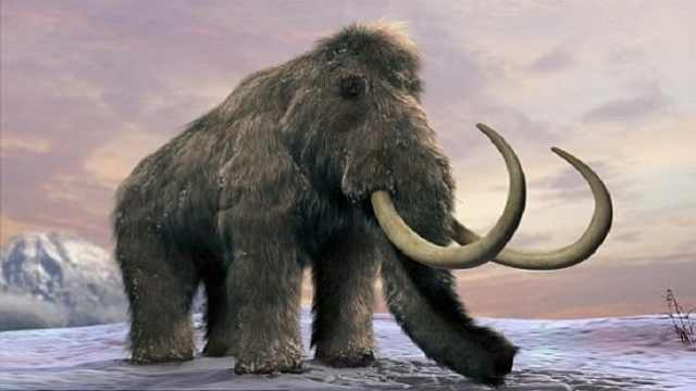 科学家们有望复活猛犸象