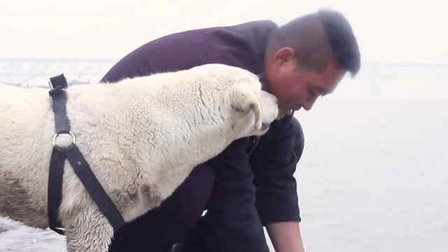 30岁小伙带一只狗徒步一万里