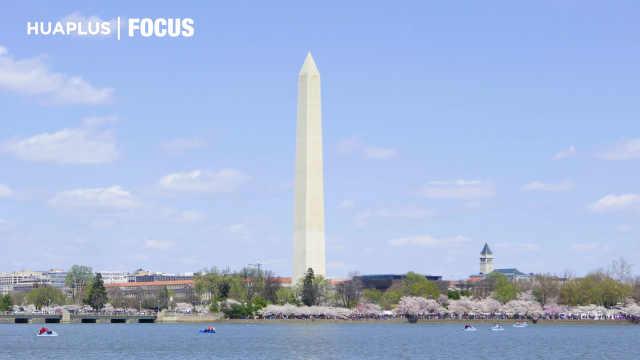 华盛顿DC樱花绽放,花不醉人人自醉