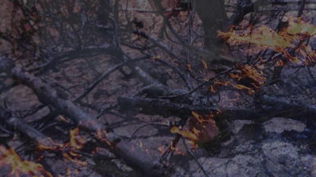 老人扫墓失火烧山因失火罪获刑受罚