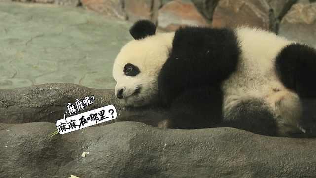 探访熊猫谷,重回大自然