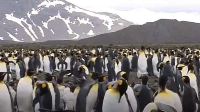 南极冰层融化,上千只帝企鹅被淹死