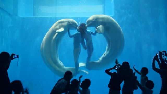 哈尔滨极地馆与白鲸明星面对面