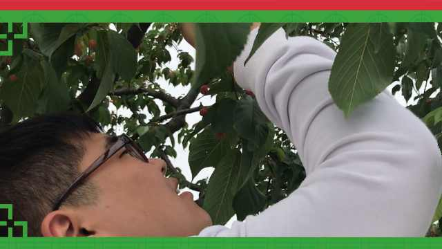 怀疑人生,樱花结的果实竟是樱桃?