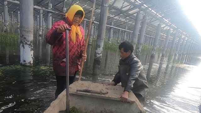 67岁农民回乡:我要陪老婆