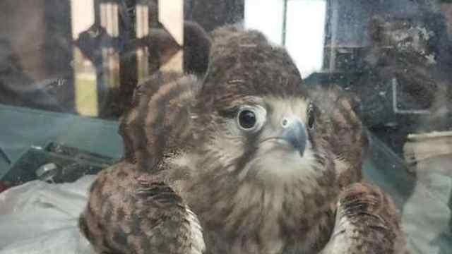 """萌翻了!""""怪鸟""""突然闯进居民家"""