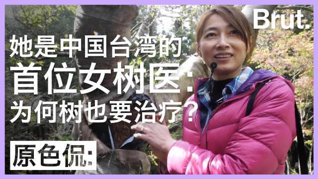 中国台湾首位女树医:如何给树看病